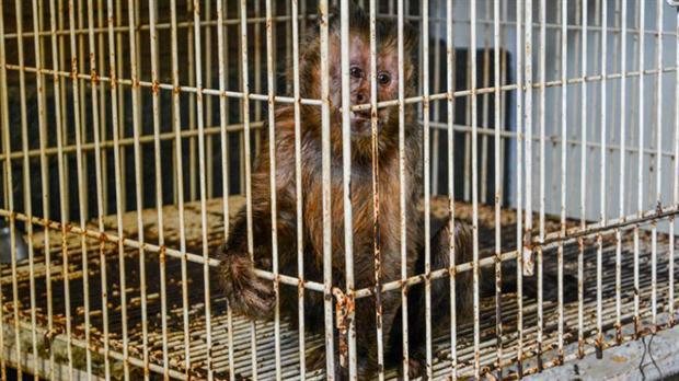 Rescataron más de 80 animales exóticos de una casa en Ituzaingó 1