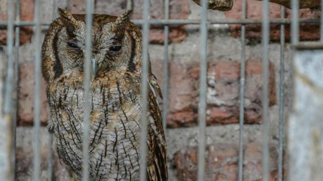 Rescataron más de 80 animales exóticos de una casa en Ituzaingó