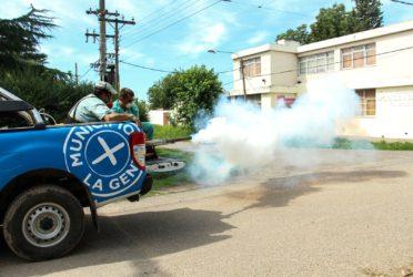 Continúa un fuerte operativo de fumigación contra la Mariposa Negra