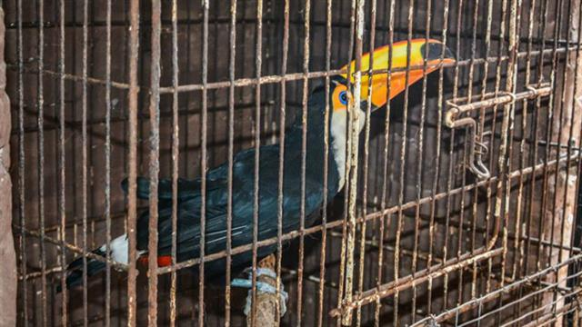 Rescataron más de 80 animales exóticos de una casa en Ituzaingó 2